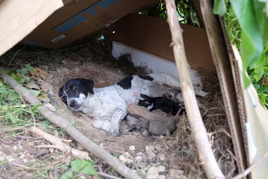 Trinidad dogs