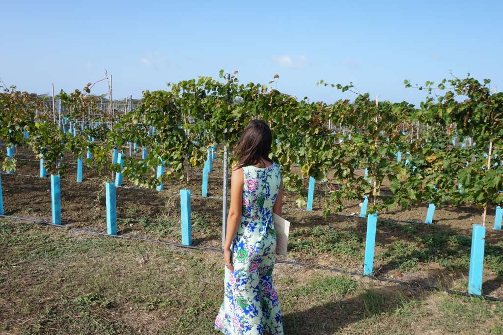curacao winery